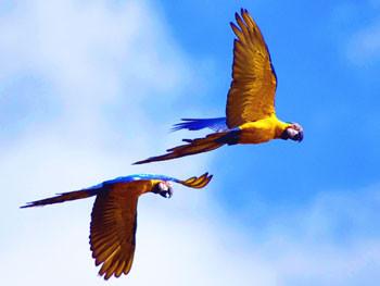 Brazil bird watching