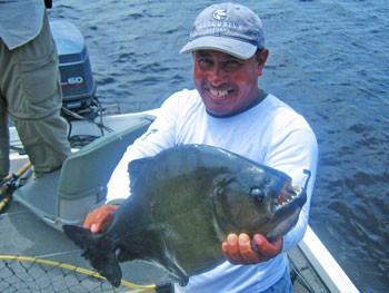 Piranha in Brazil
